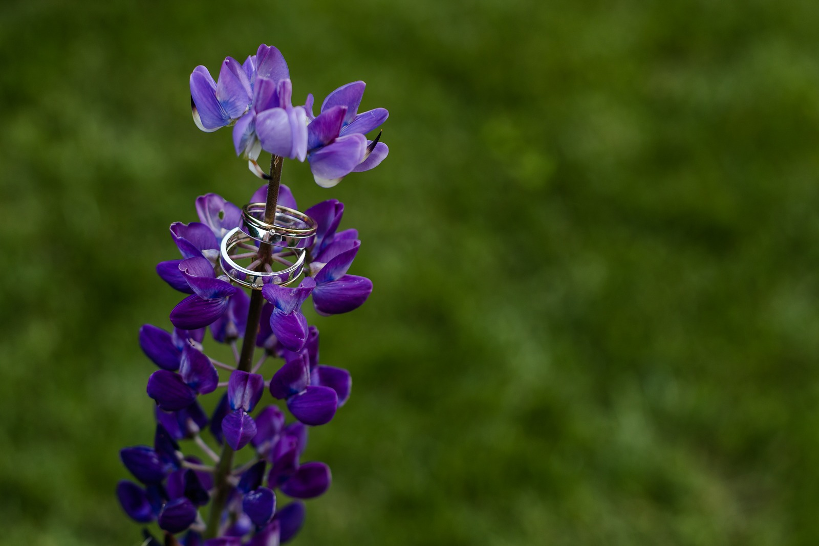 rings-flowers-detail-green-violet-italy-wedding